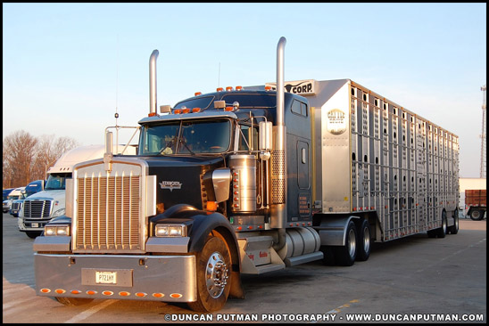 Kenworth W900L pulling a livestock trailer - Photo by Duncan Putman